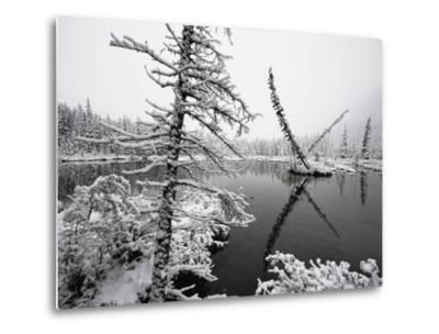 Pond and Forest in Winter-John Eastcott & Yva Momatiuk-Metal Print