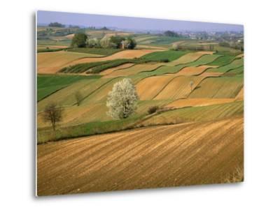Agricultural Fields on Farm-John Eastcott & Yva Momatiuk-Metal Print