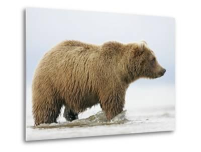 Shaggy Brown Bear in Stream-Arthur Morris-Metal Print