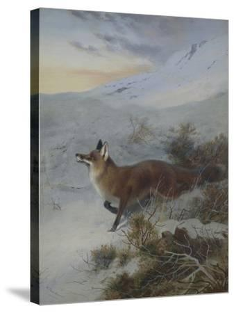 A Fox in a Winter Landscape-Archibald Thorburn-Stretched Canvas Print