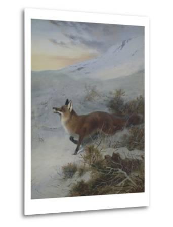 A Fox in a Winter Landscape-Archibald Thorburn-Metal Print