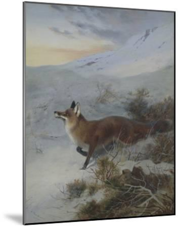 A Fox in a Winter Landscape-Archibald Thorburn-Mounted Giclee Print