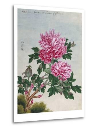 Chinese Watercolor of Pink Peonies--Metal Print