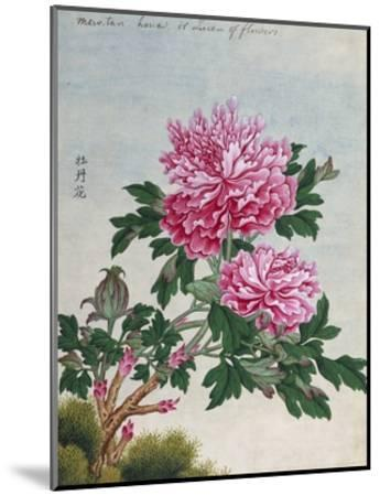 Chinese Watercolor of Pink Peonies--Mounted Giclee Print