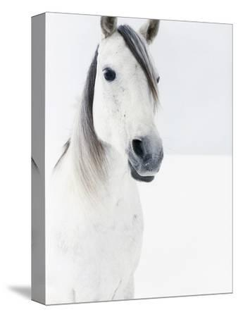 White Horse in Snow-Birgid Allig-Stretched Canvas Print
