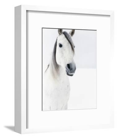 White Horse in Snow-Birgid Allig-Framed Premium Photographic Print