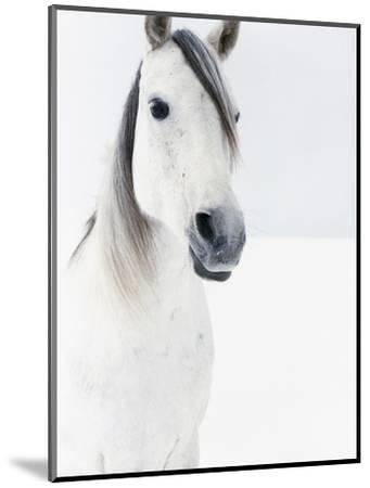 White Horse in Snow-Birgid Allig-Mounted Premium Photographic Print
