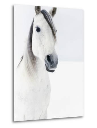 White Horse in Snow-Birgid Allig-Metal Print