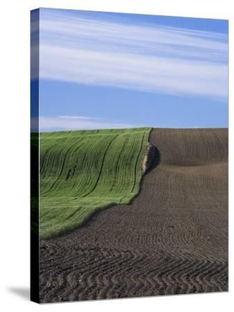 Wheat Field and Plowed Land-Frank Lukasseck-Stretched Canvas Print