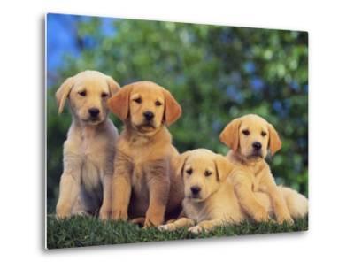Puppies--Metal Print