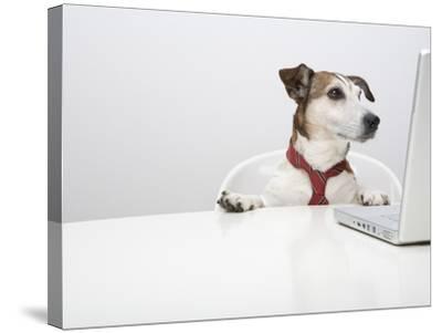 Dog in Front of Laptop at Desk-Ursula Klawitter-Stretched Canvas Print