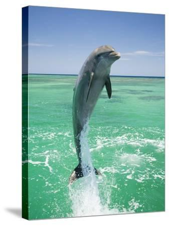 Jumping Bottlenose Dolphin-Stuart Westmorland-Stretched Canvas Print