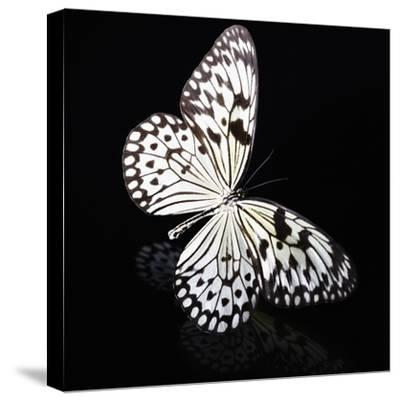 Butterfly-Sean Justice-Stretched Canvas Print