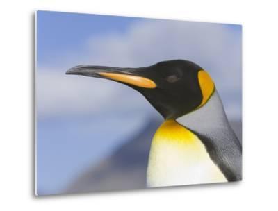 King Penguin-John Eastcott & Yva Momatiuk-Metal Print