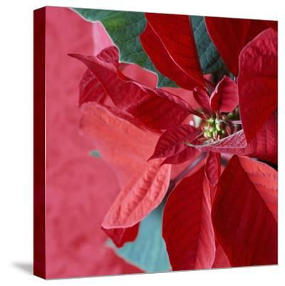 Christmas Decorations-Sean Justice-Stretched Canvas Print