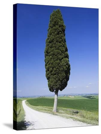 Cypress Tree by Unpaved Road-Frank Lukasseck-Stretched Canvas Print