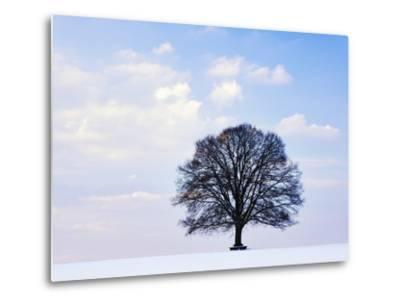 Oak Tree in Winter-Frank Lukasseck-Metal Print