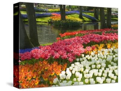 Spring Tulips by Stream-Mark Bolton-Stretched Canvas Print