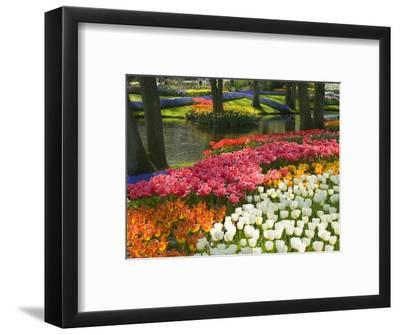 Spring Tulips by Stream-Mark Bolton-Framed Premium Photographic Print