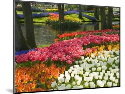 Spring Tulips by Stream-Mark Bolton-Mounted Premium Photographic Print