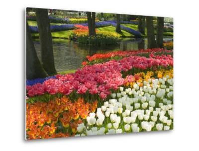 Spring Tulips by Stream-Mark Bolton-Metal Print