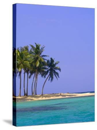 Palm Trees on Pelican Island-Blaine Harrington-Stretched Canvas Print