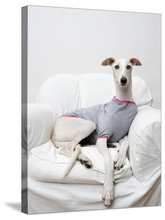 Greyhound Wearing a T-Shirt-Estelle Klawitter-Stretched Canvas Print