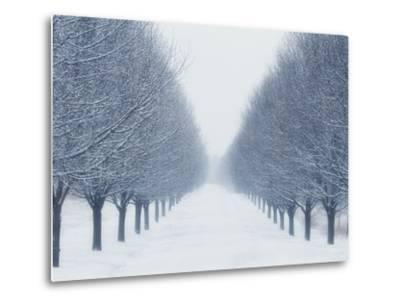 Tree-lined Road in Winter-Robert Llewellyn-Metal Print