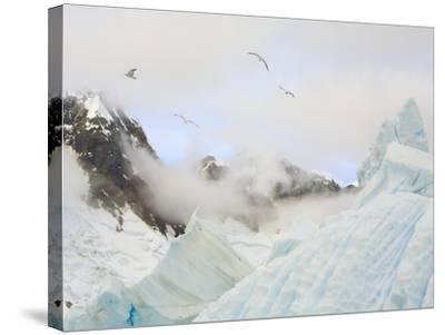 Gulls Flying Above Stranded Icebergs at Boothe Island-John Eastcott & Yva Momatiuk-Stretched Canvas Print