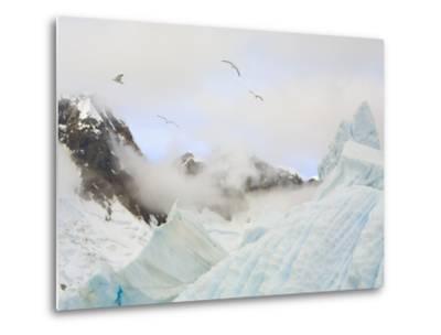 Gulls Flying Above Stranded Icebergs at Boothe Island-John Eastcott & Yva Momatiuk-Metal Print