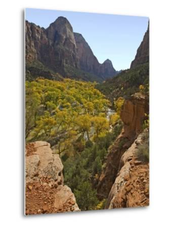 Fremont Cottonwoods at Zion National Park-James Randklev-Metal Print