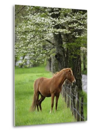 Horse Standing by Fence-William Manning-Metal Print