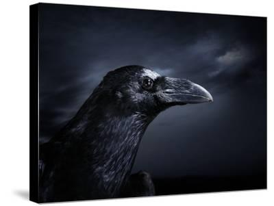 Profile of a Crow-Digital Zoo-Stretched Canvas Print