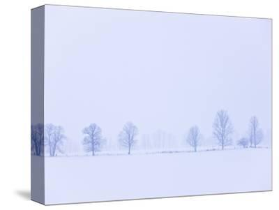 Trees Along Fence in Winter-Jim Craigmyle-Stretched Canvas Print