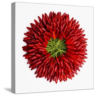 Chili Peppers--Stretched Canvas Print