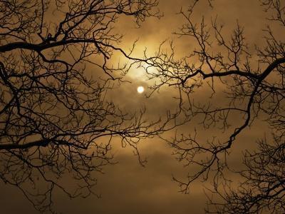 Branches Surrounding Harvest Moon-Robert Llewellyn-Premium Photographic Print