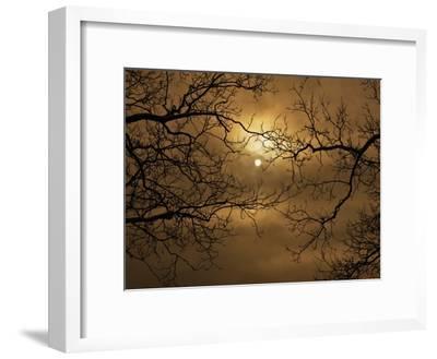 Branches Surrounding Harvest Moon-Robert Llewellyn-Framed Premium Photographic Print
