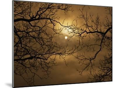 Branches Surrounding Harvest Moon-Robert Llewellyn-Mounted Premium Photographic Print