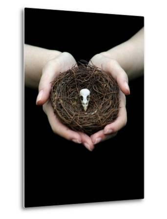 Birds Nest in Cupped Hands-Elisa Lazo De Valdez-Metal Print