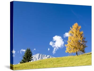 Tree in Alpine Meadow in Autumn-Frank Lukasseck-Stretched Canvas Print