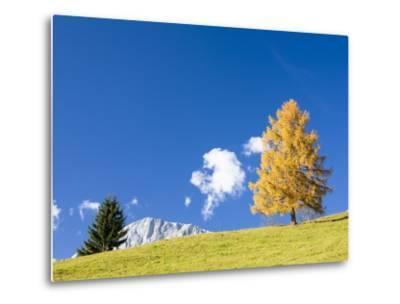 Tree in Alpine Meadow in Autumn-Frank Lukasseck-Metal Print