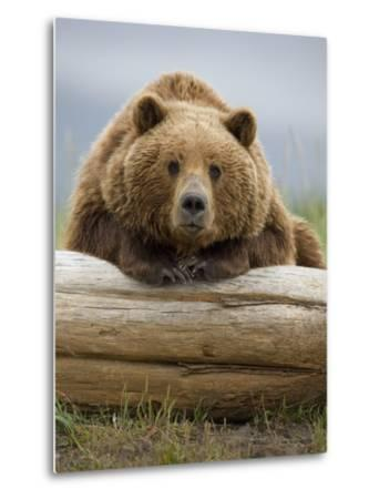 Grizzly Bear Leaning on Log at Hallo Bay-Paul Souders-Metal Print