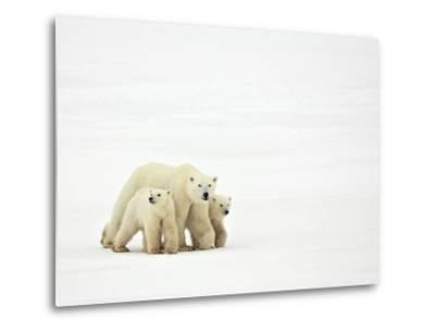 Mother and Cubs Walking-John Conrad-Metal Print