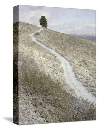 Snowy ranch road and lone tree in Inyo National Forest-John Eastcott & Yva Momatiuk-Stretched Canvas Print