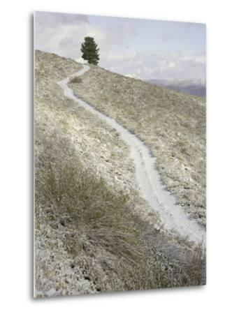 Snowy ranch road and lone tree in Inyo National Forest-John Eastcott & Yva Momatiuk-Metal Print