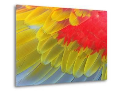 Feathers of a Scarlet Macaw-Arthur Morris-Metal Print