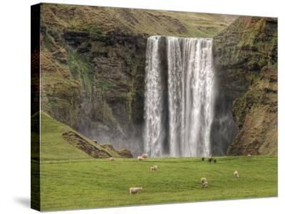 Skogarfoss with grazing sheep--Stretched Canvas Print