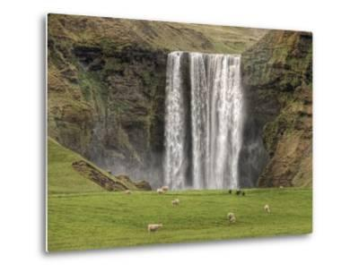 Skogarfoss with grazing sheep--Metal Print