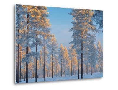 Snow-covered forest-Bruno Ehrs-Metal Print