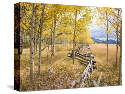 Wooden fence and Aspen forest in autumn-Frank Lukasseck-Stretched Canvas Print